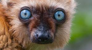 Apenheul monkey